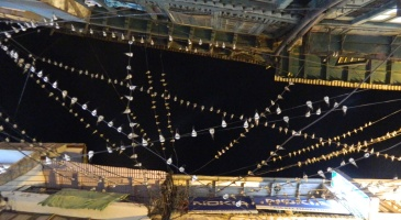 Hundreds of birds sitting on the wires at tallital (inside market at night)