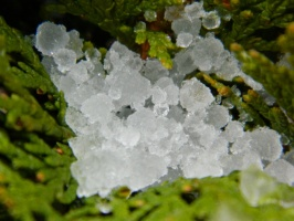 Ice crystals in leaves
